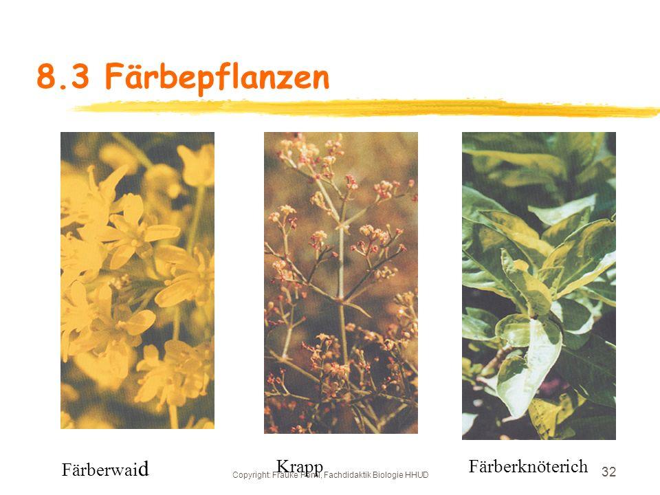 Copyright: Frauke Pöml, Fachdidaktik Biologie HHUD 31 8.3 Färbepflanzen Saflor Färberwau
