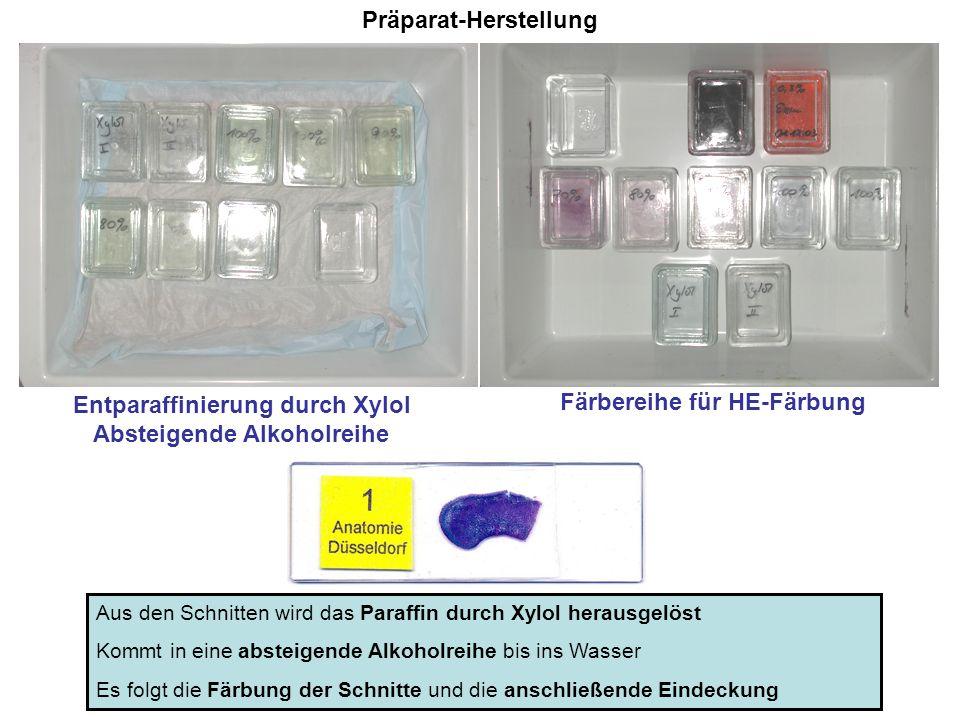 Präparat-Herstellung Entparaffinierung durch Xylol Absteigende Alkoholreihe Färbereihe für HE-Färbung Aus den Schnitten wird das Paraffin durch Xylol