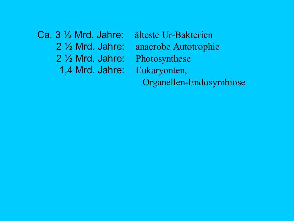 Ca.3 ½ Mrd. Jahre: älteste Ur-Bakterien 2 ½ Mrd. Jahre: anaerobe Autotrophie 2 ½ Mrd.
