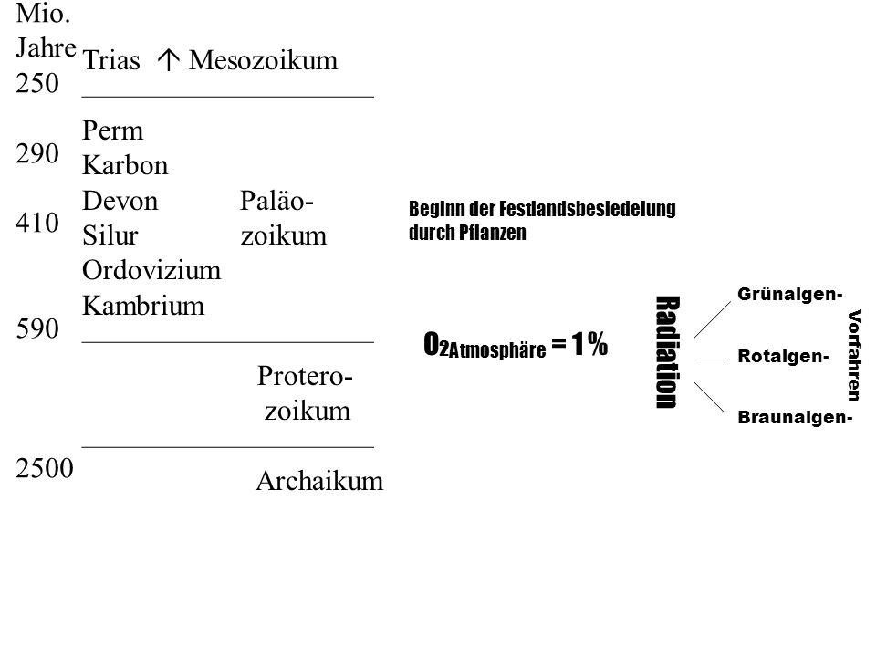 O 2 Atmosphäre = 1 % Radiation Grünalgen- Rotalgen- Braunalgen- Vorfahren Beginn der Festlandsbesiedelung durch Pflanzen Mio. Jahre 250 290 410 590 25