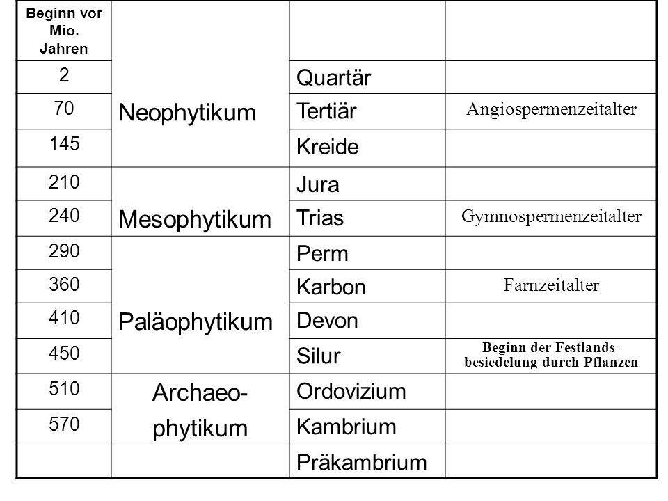 Beginn vor Mio. Jahren 2 Quartär 70 Neophytikum Tertiär Angiospermenzeitalter 145 Kreide 210 Jura 240 Mesophytikum Trias Gymnospermenzeitalter 290 Per
