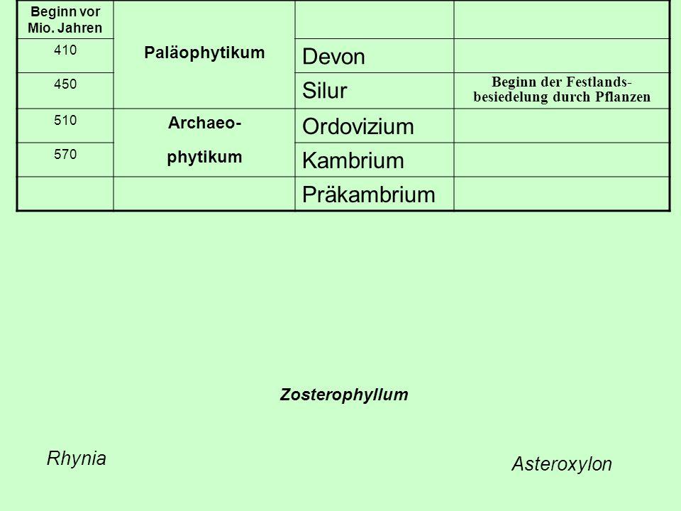 Beginn vor Mio. Jahren 410 Paläophytikum Devon 450 Silur Beginn der Festlands- besiedelung durch Pflanzen 510 Archaeo- Ordovizium 570 phytikum Kambriu