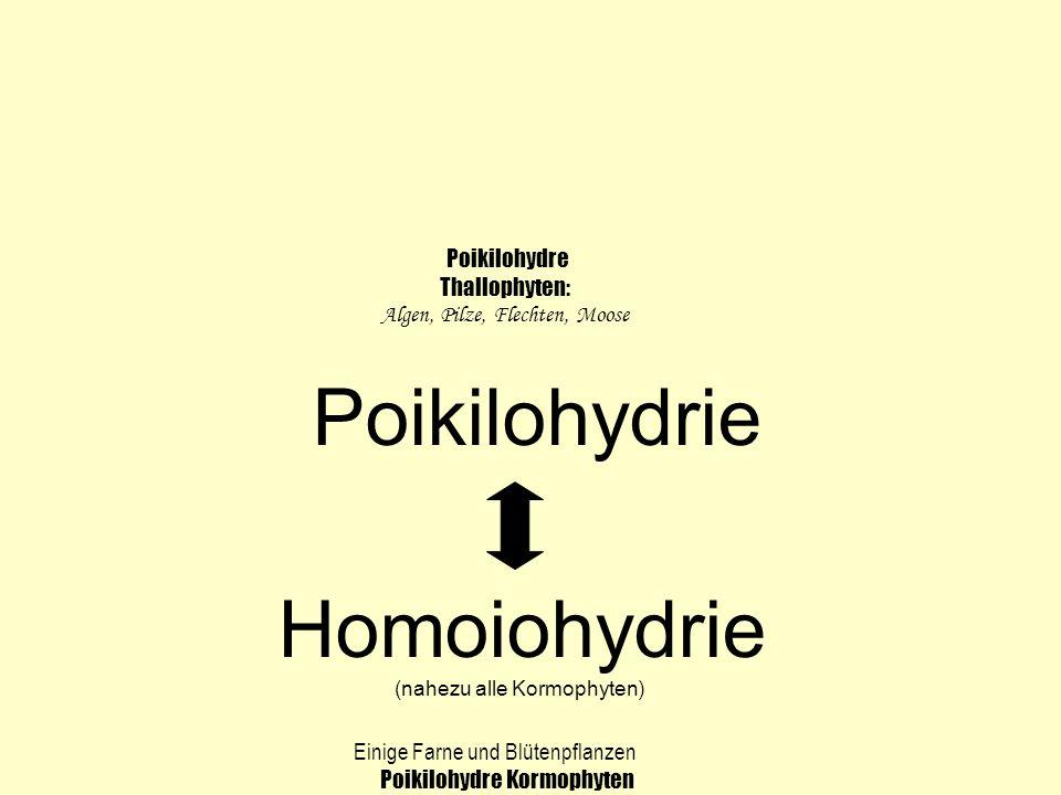 Poikilohydrie Homoiohydrie (nahezu alle Kormophyten) Poikilohydre Thallophyten: Algen, Pilze, Flechten, Moose Einige Farne und Blütenpflanzen Poikiloh