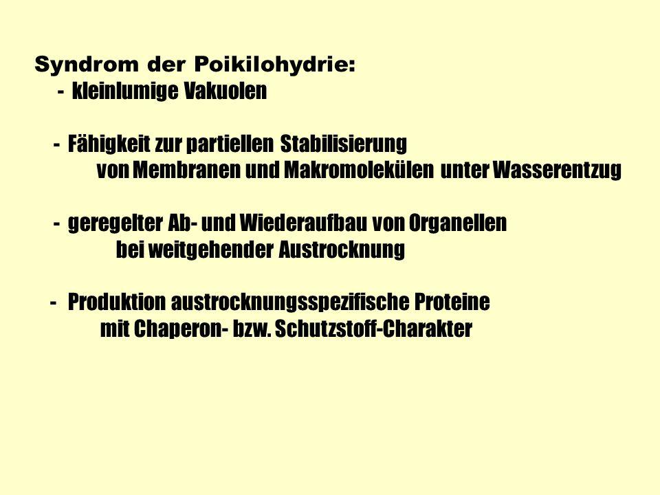 Syndrom der Poikilohydrie: - kleinlumige Vakuolen - Fähigkeit zur partiellen Stabilisierung von Membranen und Makromolekülen unter Wasserentzug - gere