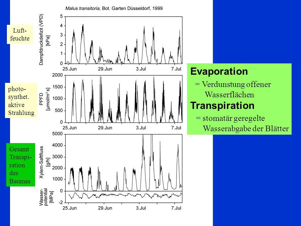 Evaporation = Verdunstung offener Wasserflächen Transpiration = stomatär geregelte Wasserabgabe der Blätter Luft- feuchte photo- synthet. aktive Strah