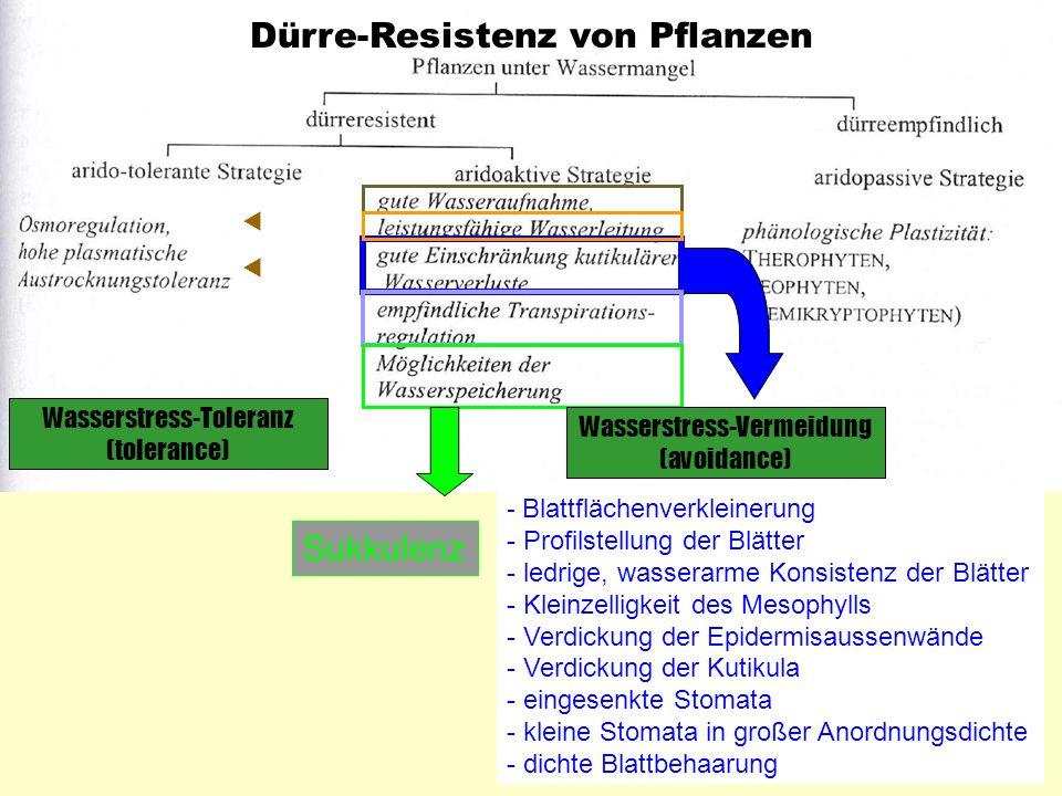 Dürre-Resistenz von Pflanzen - Blattflächenverkleinerung - Profilstellung der Blätter - ledrige, wasserarme Konsistenz der Blätter - Kleinzelligkeit d