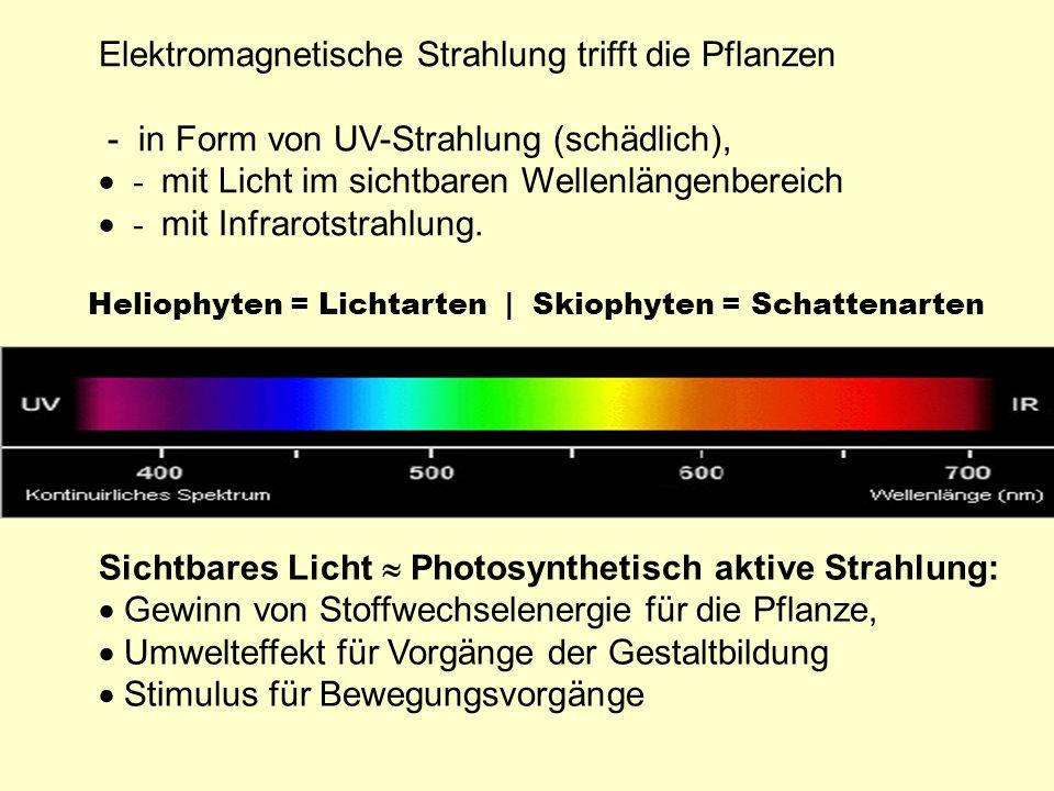 Elektromagnetische Strahlung trifft die Pflanzen - in Form von UV-Strahlung (schädlich), - mit Licht im sichtbaren Wellenlängenbereich - mit Infrarots