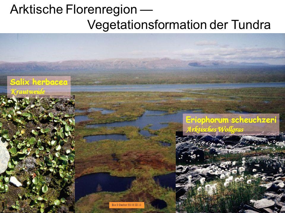Boreale Florenregion Vegetationsformation der Taiga Picea abies = P.