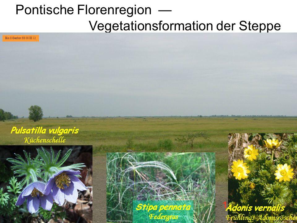 Makaronesisch-mediterrane Florenregion Formation der Hartlaubvegetation Quercus ilex Steineiche Quercus coccifera Kermeseiche Macchia Bio 8 Geobot SS 08 III 13