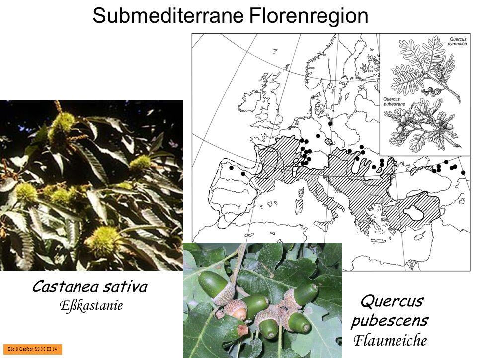 Atlantische Florenregion Vegetationsformation der Zwergstrauchheiden Ulex europaeus Stechginster Tamus communis Schmerwurz Bio 8 Geobot SS 08 III 15 Ilex aquifolium Stechpalme