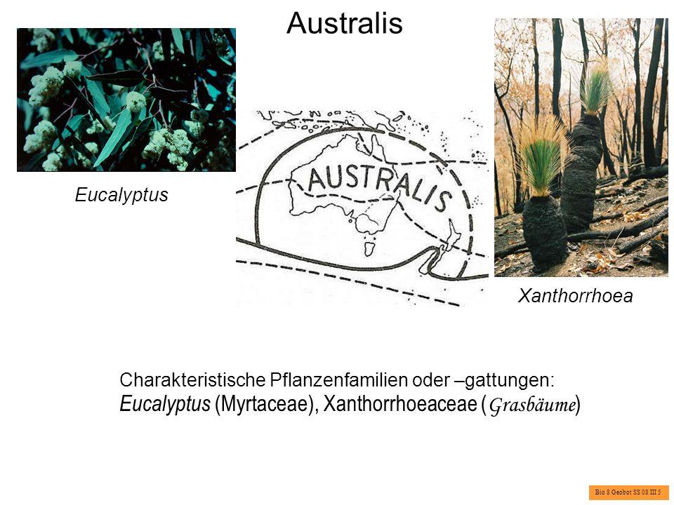 Antarktis Charakteristische Pflanzengattungen: Pringlea, Azorella, Colobanthus Pringlea antiscorbutica Brassicaceae Azorella spec.