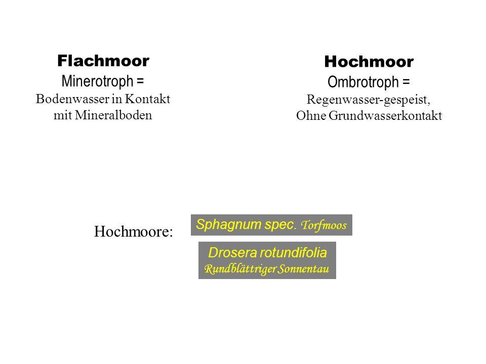 Flachmoor Minerotroph = Bodenwasser in Kontakt mit Mineralboden Hochmoor Ombrotroph = Regenwasser-gespeist, Ohne Grundwasserkontakt Hochmoore: Sphagnu
