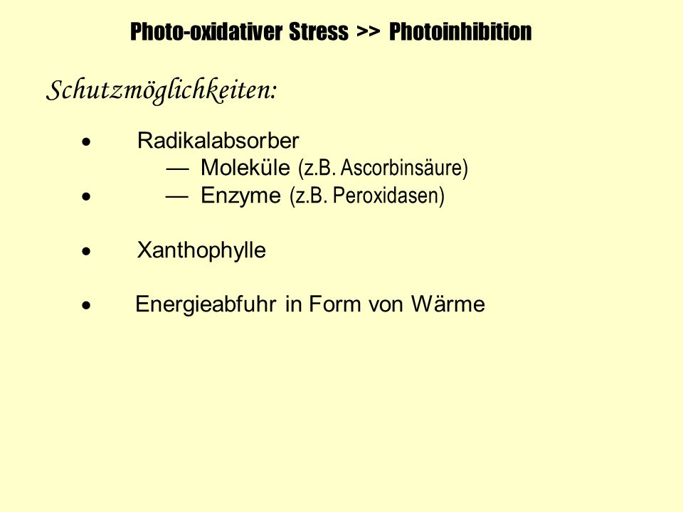 Photo-oxidativer Stress >> Photoinhibition Schutzmöglichkeiten: Radikalabsorber Moleküle (z.B. Ascorbinsäure) Enzyme (z.B. Peroxidasen) Xanthophylle E