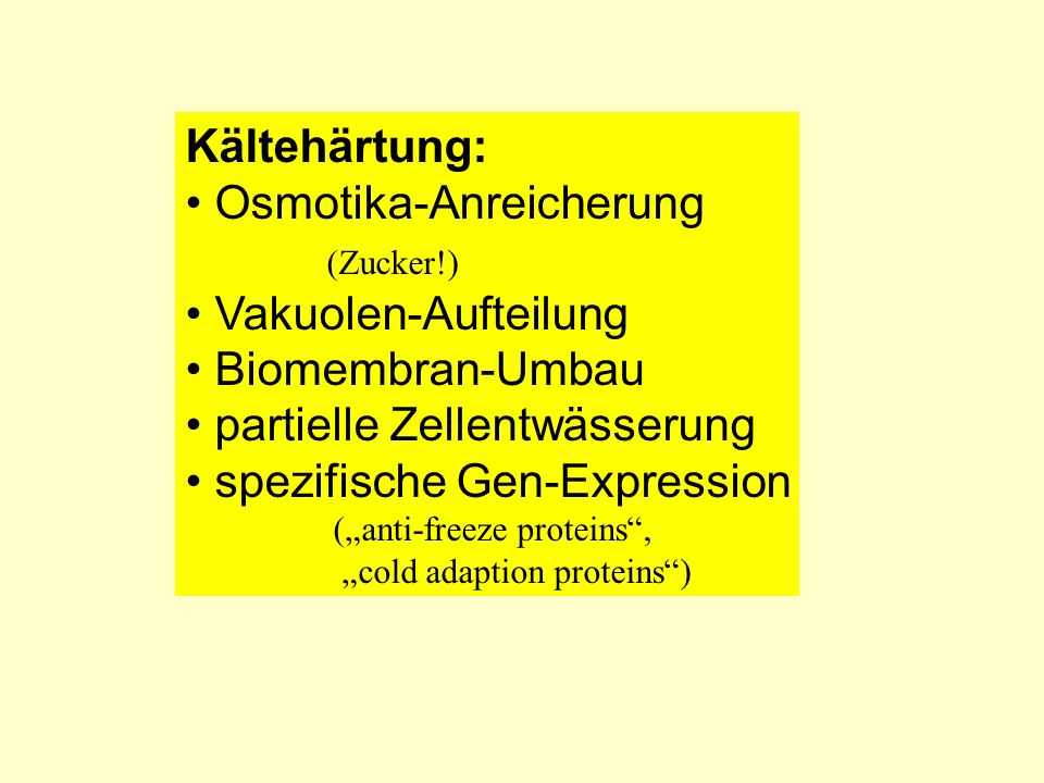 Kältehärtung: Osmotika-Anreicherung (Zucker!) Vakuolen-Aufteilung Biomembran-Umbau partielle Zellentwässerung spezifische Gen-Expression (anti-freeze proteins, cold adaption proteins)