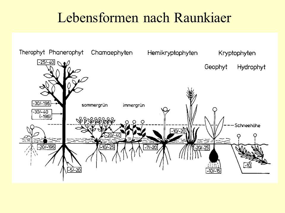 Lebensformen nach Raunkiaer