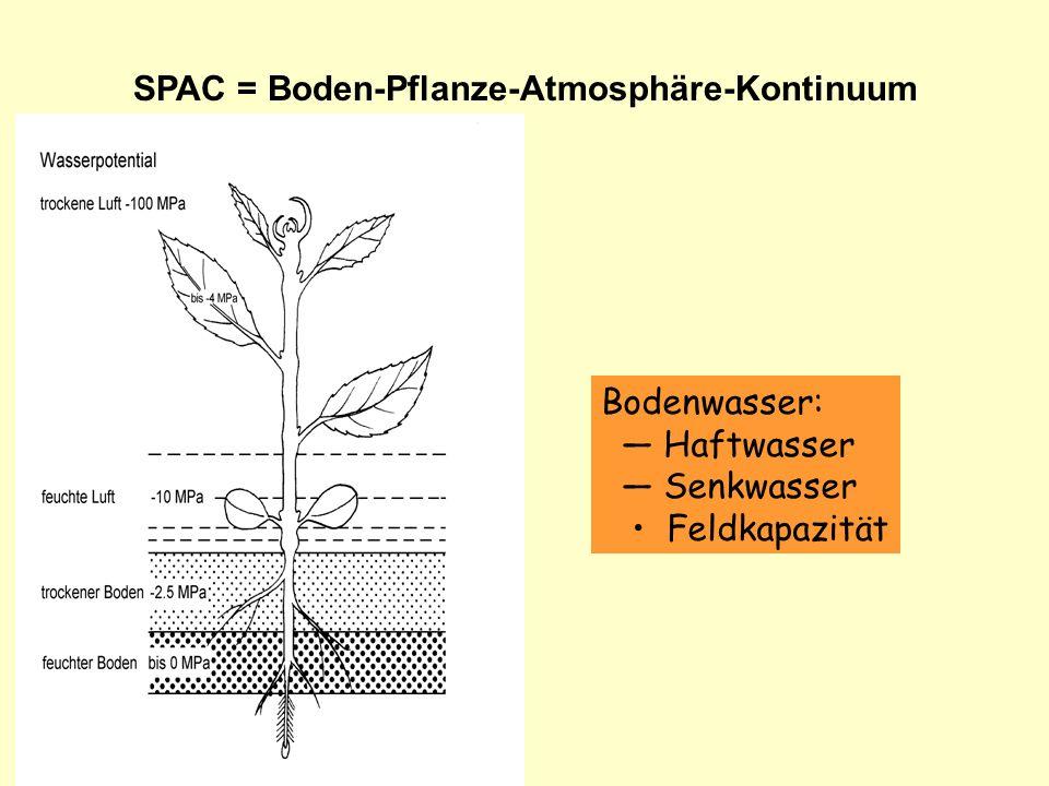 SPAC = Boden-Pflanze-Atmosphäre-Kontinuum Bodenwasser: Haftwasser Senkwasser Feldkapazität