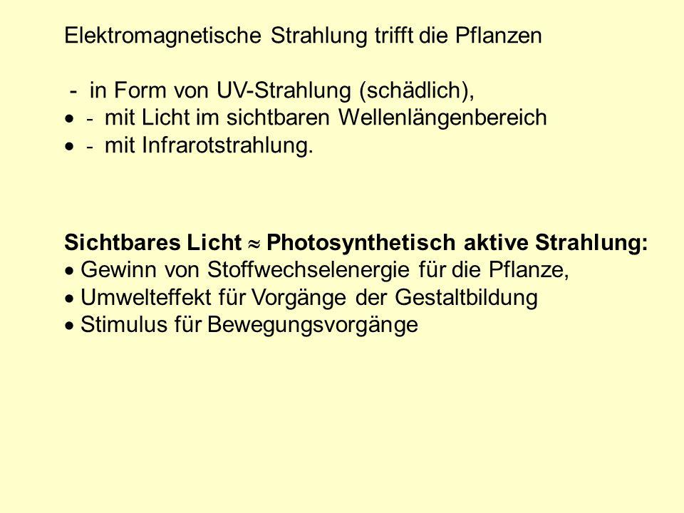 Lichtpflanzen Schattenpflanzen (Heliophyten) (Skiophyten) Chl. a / Chl. b 2 – 3 3 - 4
