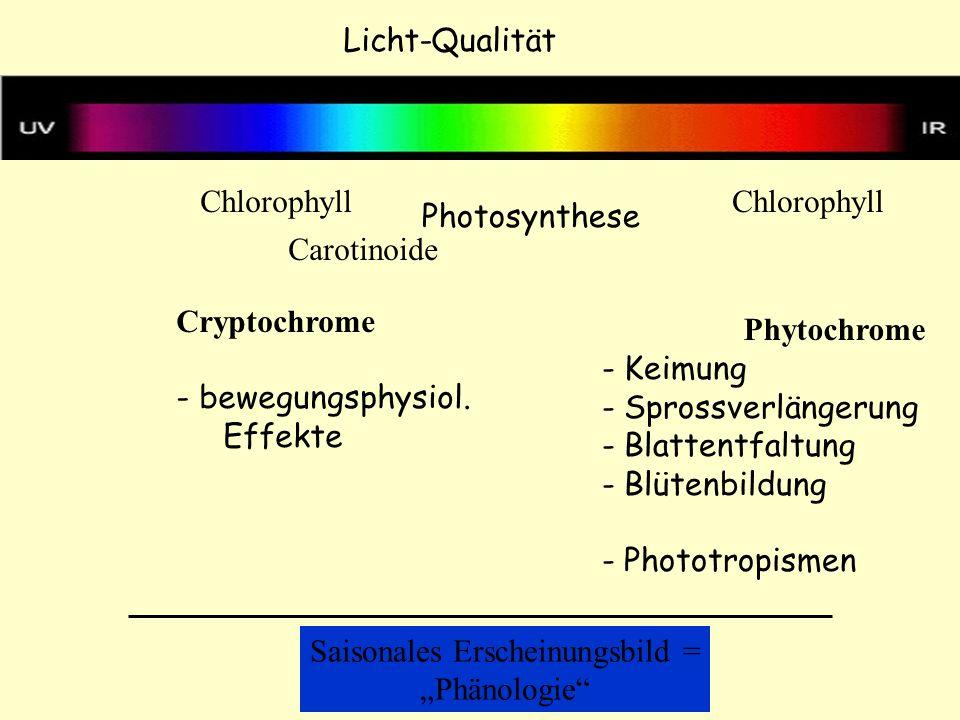 Licht-Qualität Phytochrome Cryptochrome - bewegungsphysiol. Effekte - Keimung - Sprossverlängerung - Blattentfaltung - Blütenbildung - Phototropismen