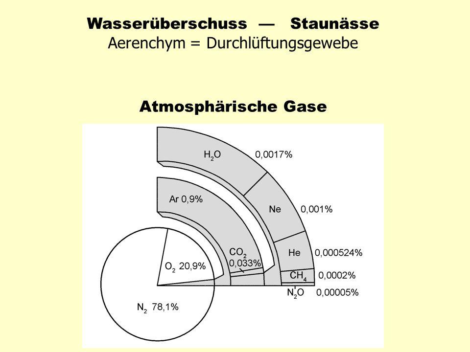 Wasserüberschuss Staunässe Aerenchym = Durchlüftungsgewebe Atmosphärische Gase