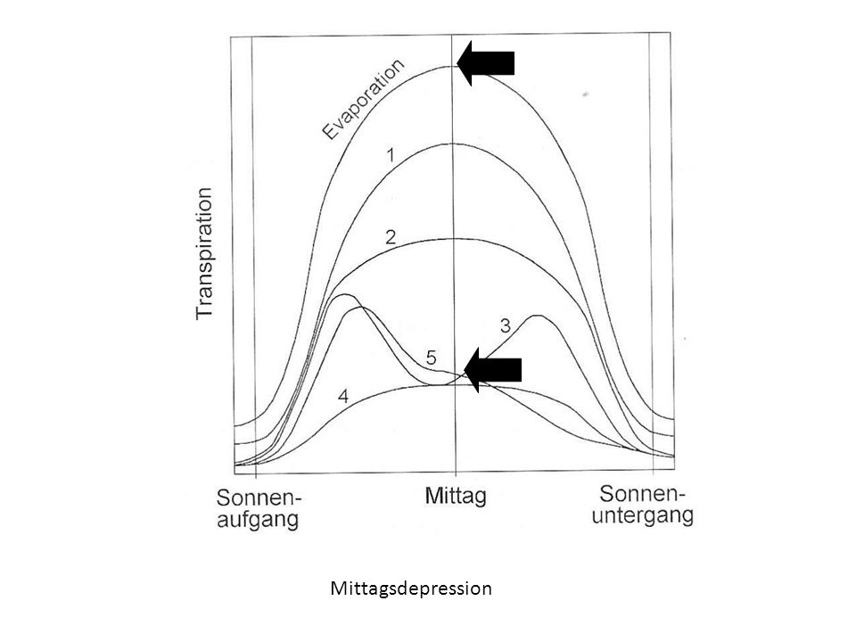 Mittagsdepression