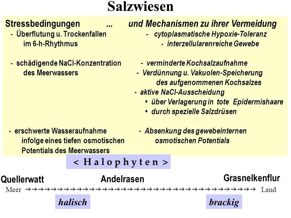 Stressbedingungen... und Mechanismen zu ihrer Vermeidung - Überflutung u. Trockenfallen - cytoplasmatische Hypoxie-Toleranz im 6-h-Rhythmus - interzel