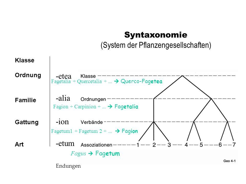 Syntaxonomie (System der Pflanzengesellschaften) Klasse Ordnung Familie Gattung Art -etea -alia -ion -etum Endungen Fagus Fagetum Fagetum1 + Fagetum 2