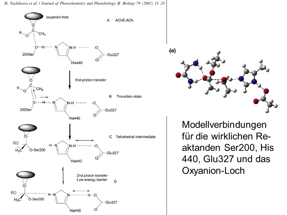 RO Modellverbindungen für die wirklichen Re- aktanden Ser200, His 440, Glu327 und das Oxyanion-Loch