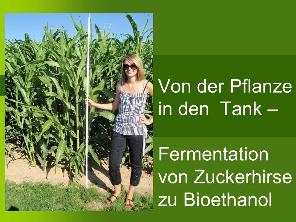 a) Bestimmung der optimalen Hefeart Hefearten: Kitzinger Weinhefe Dr.Oetker Backhefe Superstart Hochleistungshefe