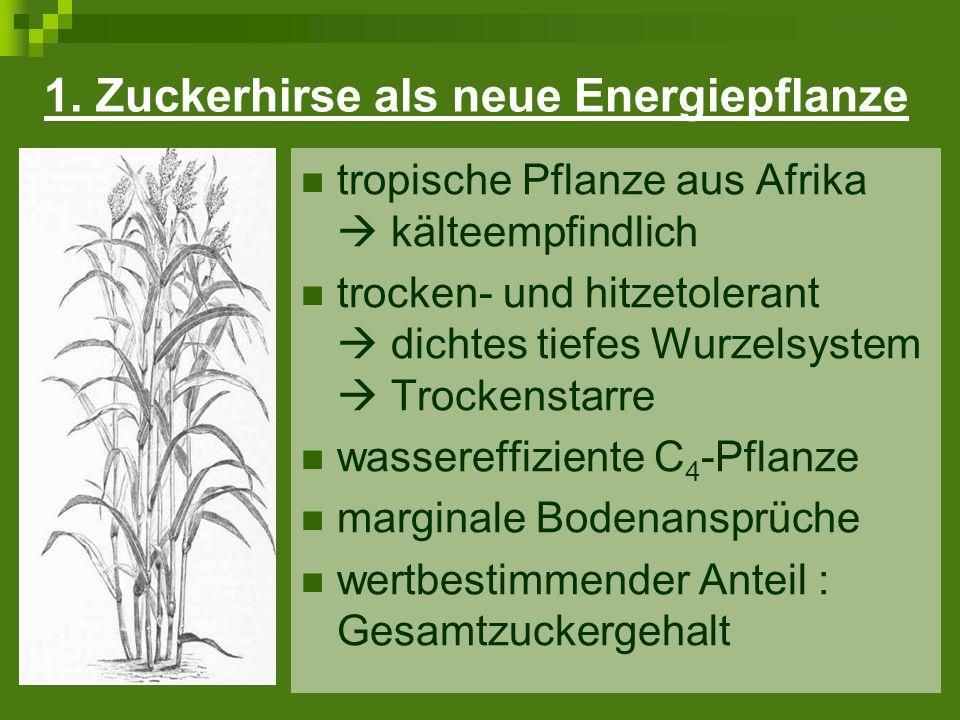 Verwertung der Zuckerhirse Jetzt: Nutzung des Zuckerhirsepresssaft (Ethanol) Nutzung der Bagasse (Energiegewinnung) Künftig: Ganzpflanzennutzung (Pilotstadium)