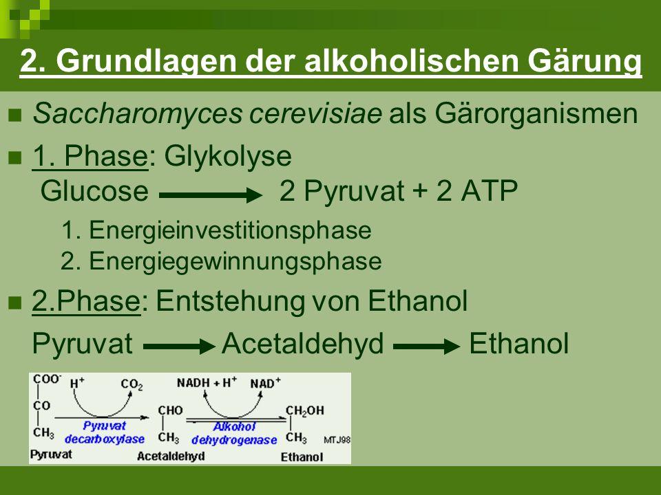 d) Verwendung von Nährsalzen Nährsalze: AYF 1000 (Lallemand Ltd.) EnerTrace KS (Erbslöh) Versorgung der Hefe bei Wachstum Zellvermehrung