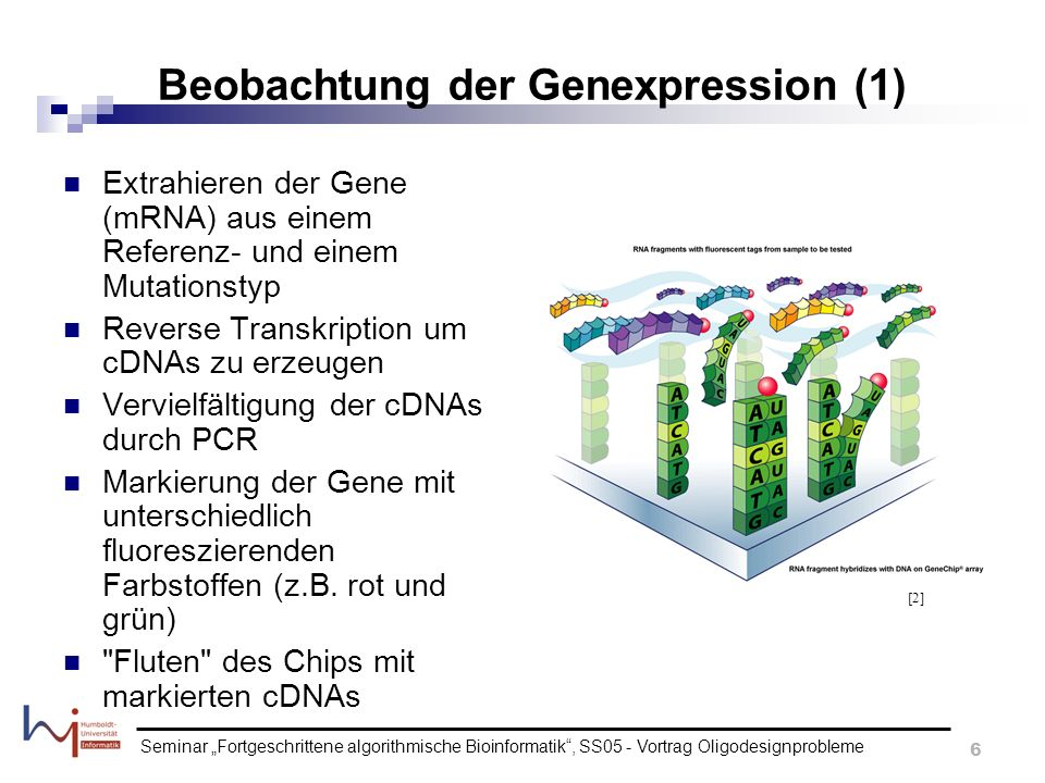 Seminar Fortgeschrittene algorithmische Bioinformatik, SS05 - Vortrag Oligodesignprobleme 7 Beobachtung der Genexpression (2) Temperatur-Erhöhung um Fehl-Hybridisierungen zu denaturieren Waschen des Chips Beseitigung von ungebundener cDNA Auswertung der Daten, bzw.