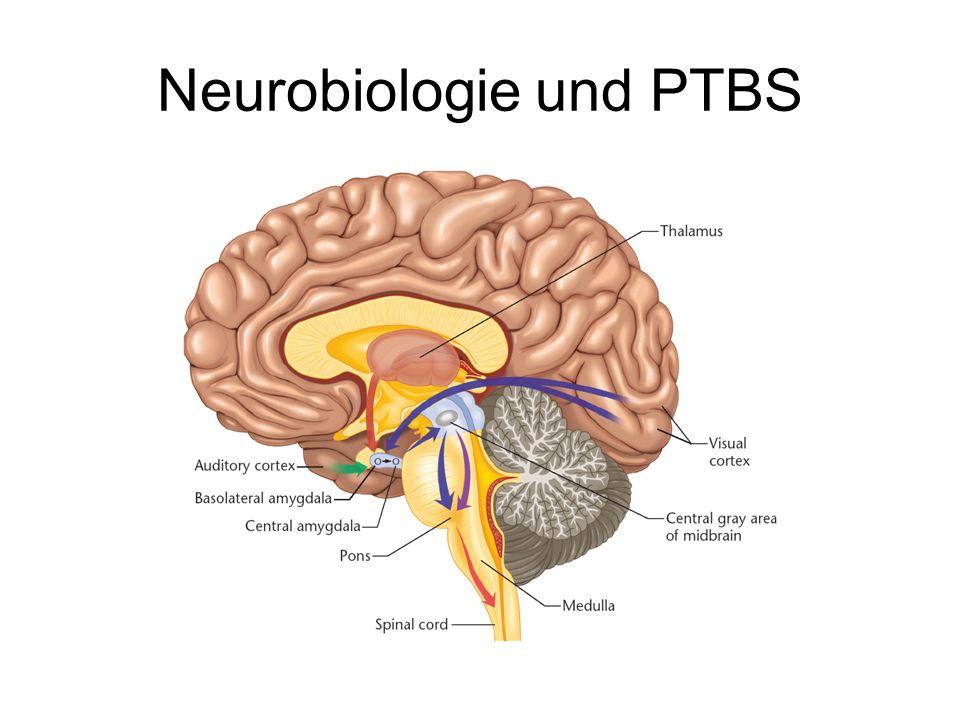 Neurobiologie und PTBS