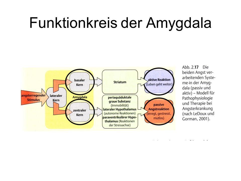 Funktionkreis der Amygdala