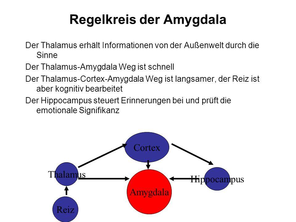 Amygdala Reiz Thalamus Cortex Hippocampus Regelkreis der Amygdala Der Thalamus erhält Informationen von der Außenwelt durch die Sinne Der Thalamus-Amy