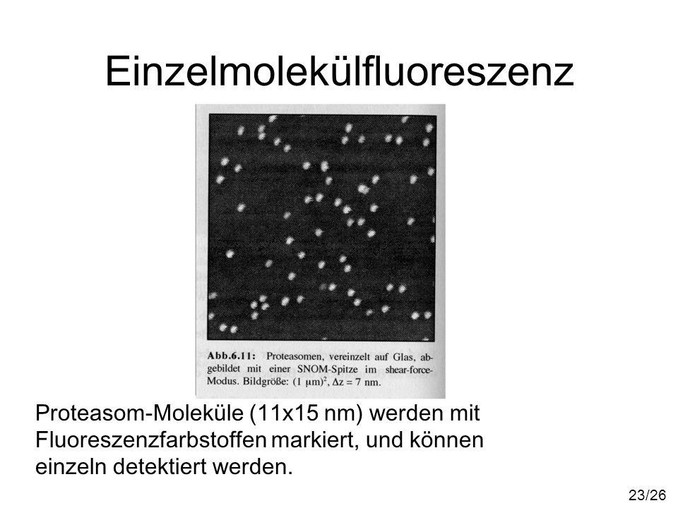 Einzelmolekülfluoreszenz Proteasom-Moleküle (11x15 nm) werden mit Fluoreszenzfarbstoffen markiert, und können einzeln detektiert werden. 23/26