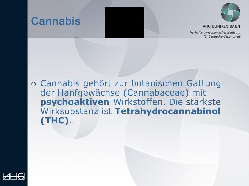 13.01.2014 Cannabis Cannabis gehört zur botanischen Gattung der Hanfgewächse (Cannabaceae) mit psychoaktiven Wirkstoffen. Die stärkste Wirksubstanz is