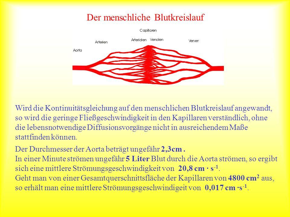 Der menschliche Blutkreislauf Wird die Kontinuitätsgleichung auf den menschlichen Blutkreislauf angewandt, so wird die geringe Fließgeschwindigkeit in