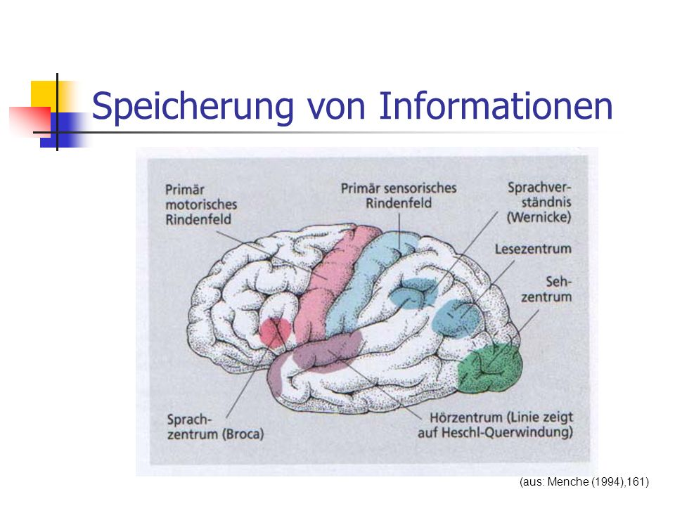 Speicherung von Informationen (aus: Menche (1994),161)