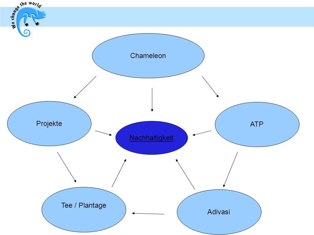 Chameleon Tee / Plantage Adivasi Projekte ATP Nachhaltigkeit