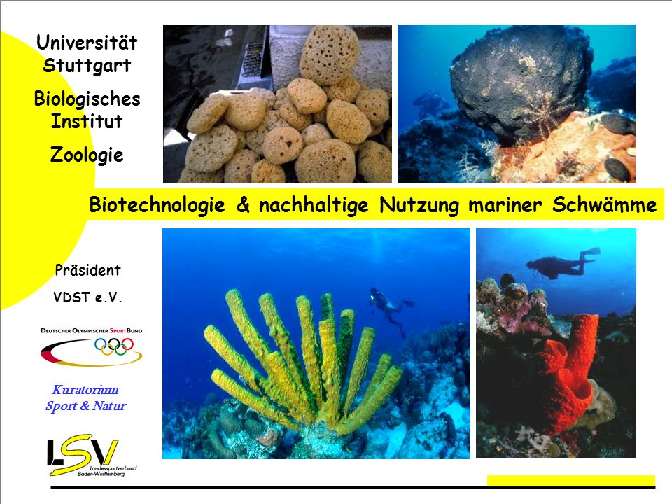 Biotechnologie & nachhaltige Nutzung mariner Schwämme Universität Stuttgart Biologisches Institut Zoologie Präsident VDST e.V.