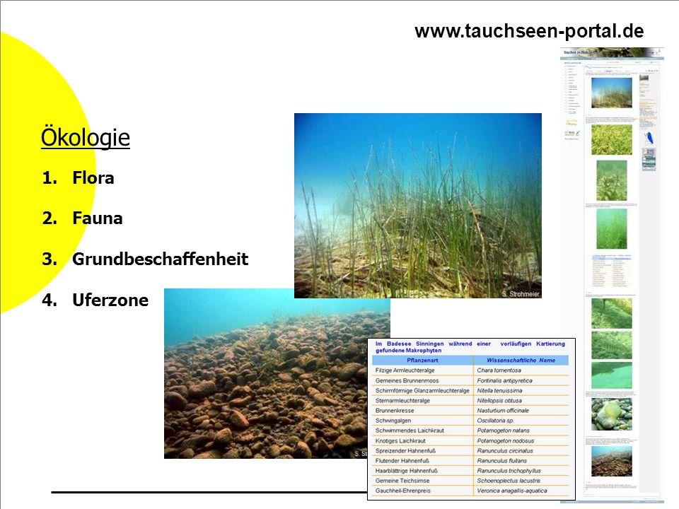 Ökologie 1. Flora 2. Fauna 3. Grundbeschaffenheit 4. Uferzone www.tauchseen-portal.de