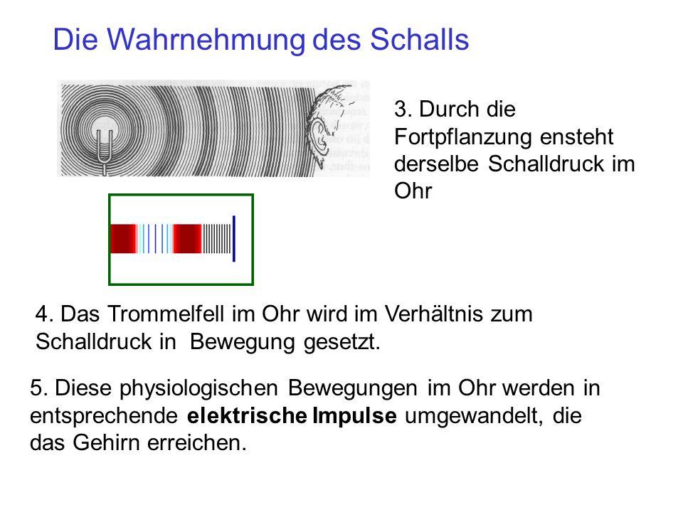 Die Wahrnehmung des Schalls 4. Das Trommelfell im Ohr wird im Verhältnis zum Schalldruck in Bewegung gesetzt. 5. Diese physiologischen Bewegungen im O