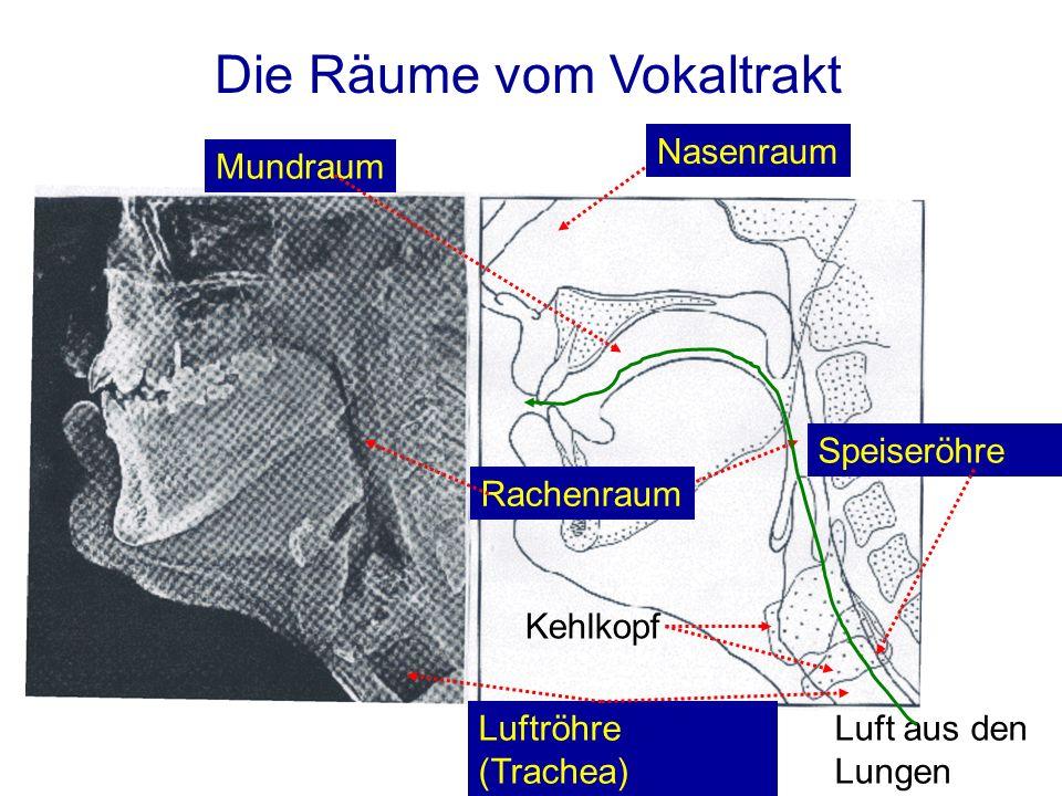 Unterlippe Oberlippe Obere Zähne ZahndammWeicher Gaumen Zäpfchen Wurzel Hauptkomponente des Vokaltrakts Aus J.