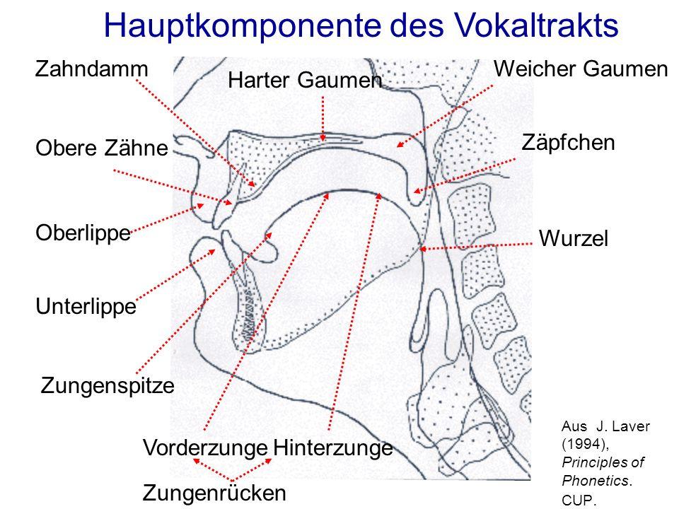 [d] Velum-HebungVelum-Senkung [n] Luft Der Velum: orale und nasale Laute (oral)(nasal)