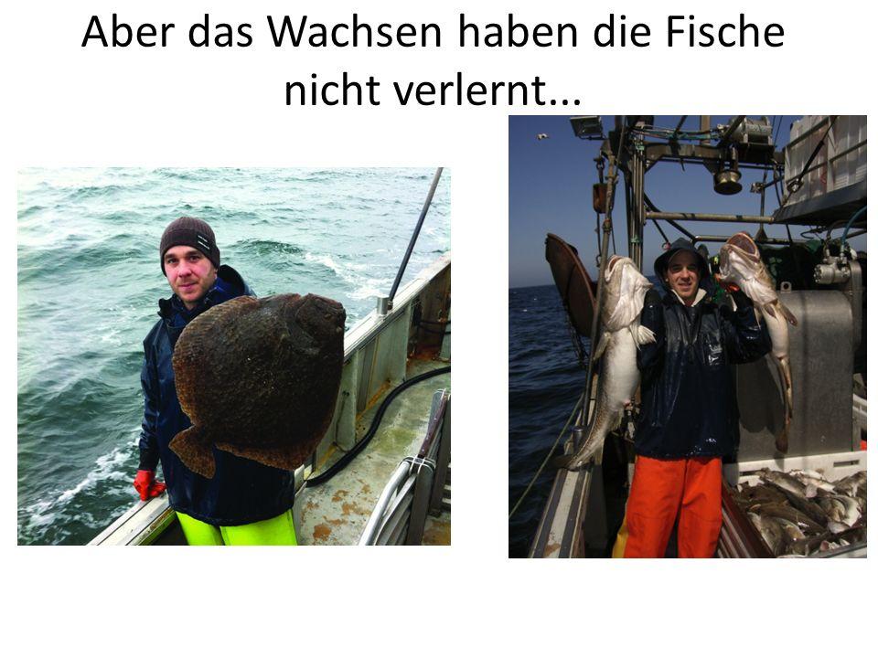 Aber das Wachsen haben die Fische nicht verlernt...