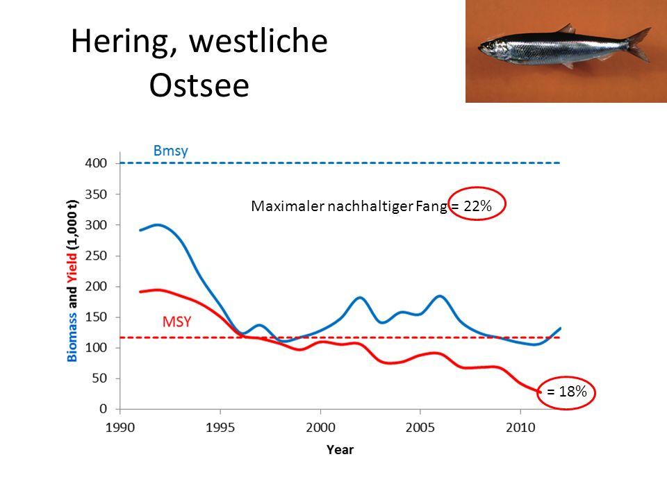 Hering, westliche Ostsee Maximaler nachhaltiger Fang = 22% = 18%