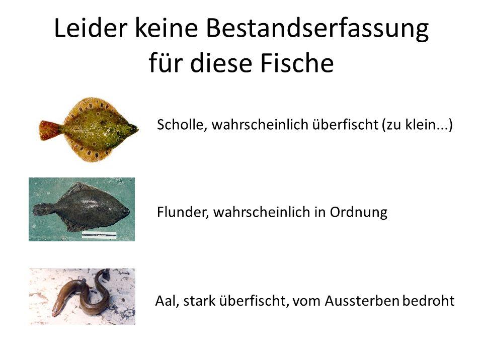 Leider keine Bestandserfassung für diese Fische Scholle, wahrscheinlich überfischt (zu klein...) Flunder, wahrscheinlich in Ordnung Aal, stark überfis