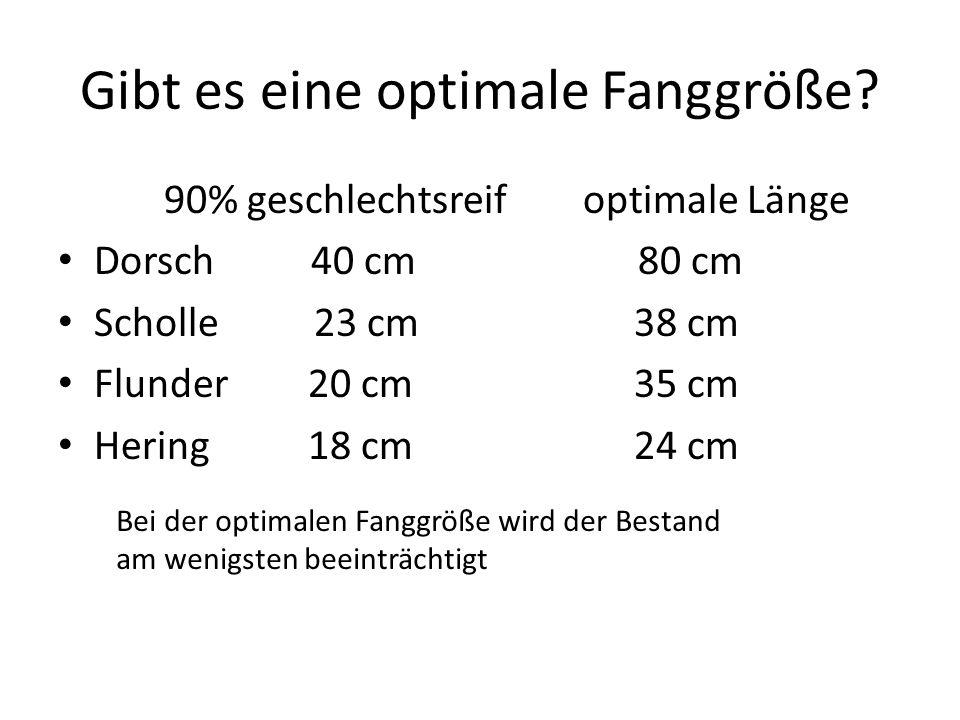 Gibt es eine optimale Fanggröße? 90% geschlechtsreif optimale Länge Dorsch 40 cm 80 cm Scholle 23 cm38 cm Flunder 20 cm35 cm Hering 18 cm24 cm Bei der