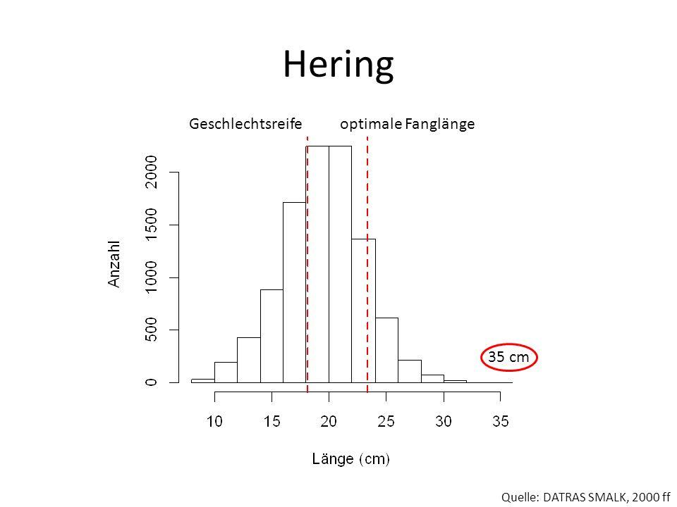 Hering Geschlechtsreifeoptimale Fanglänge Quelle: DATRAS SMALK, 2000 ff 35 cm