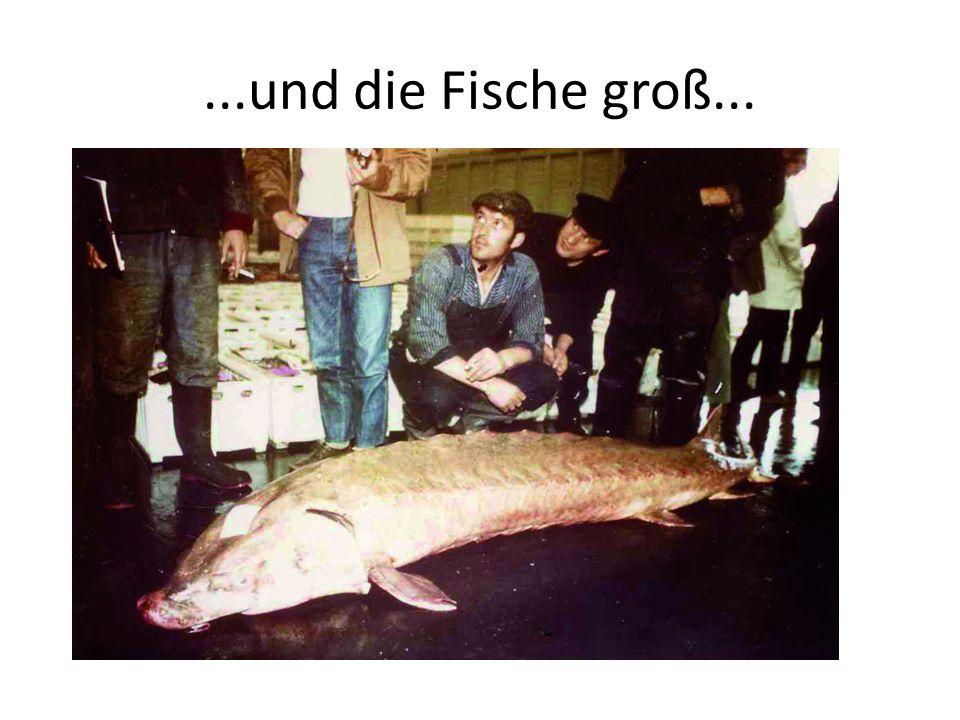 ...und die Fische groß...